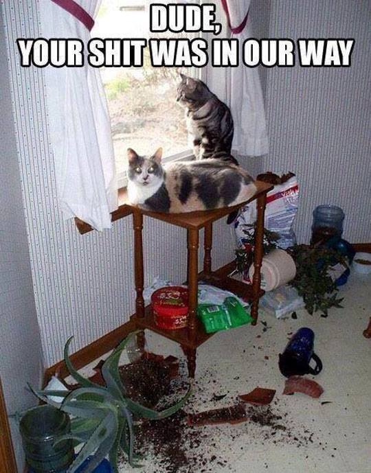 cats-flowers-mess