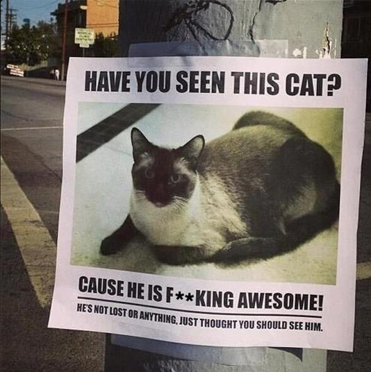 cool-cat-sign-awesome