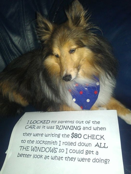 cool-dog-shaming-car-running