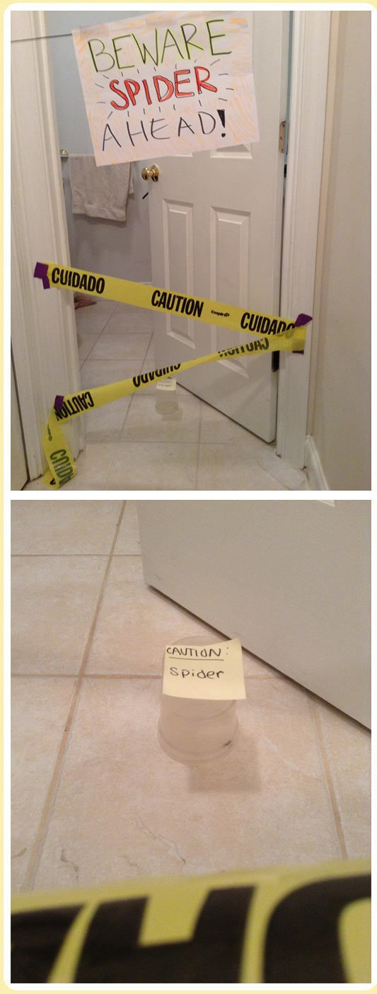 cool-spiders-bathroom-line-danger