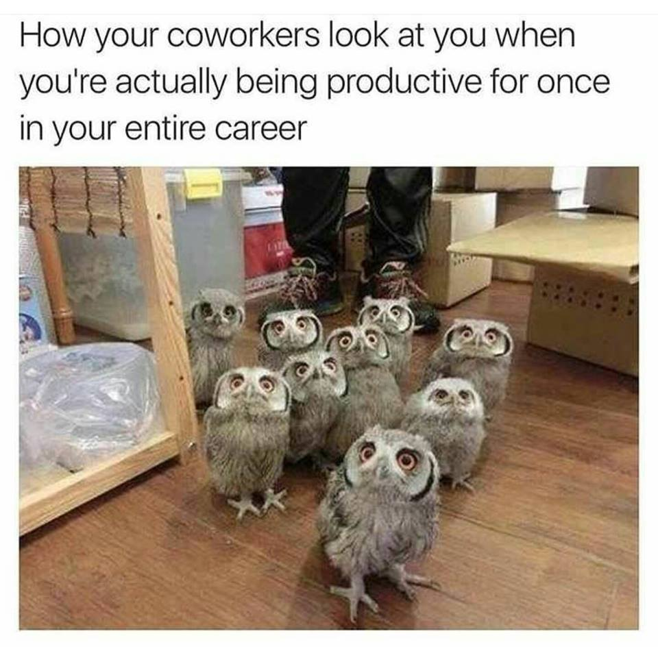 coworkers-owls-protutive