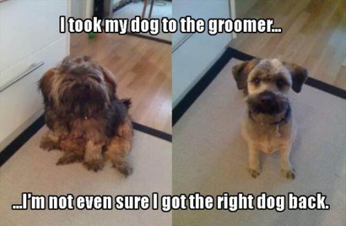 dog-groomer-different-confusing