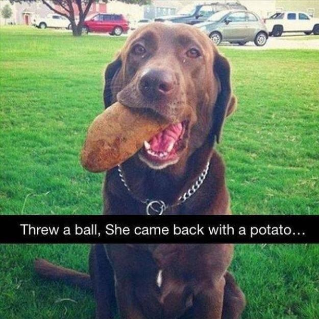 dog-potato-ball