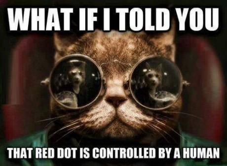 cat-morpheus-dog-meme