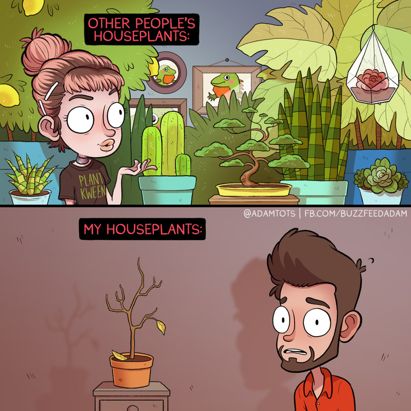 comics-books-of-adam-houseplants