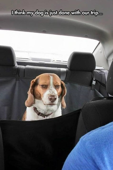 dog-trip-angry-pissed