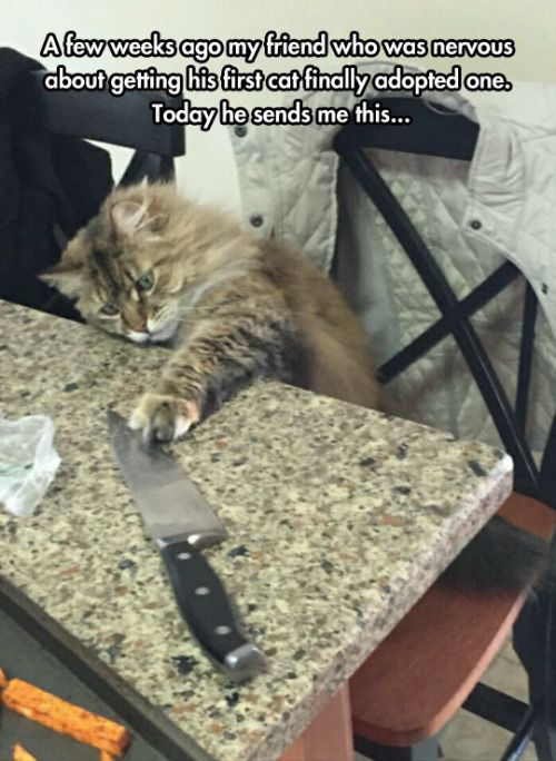 first-cat-friend-knife