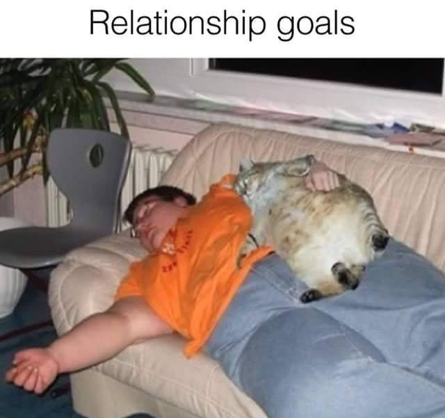 relationship-goals-cat-fat