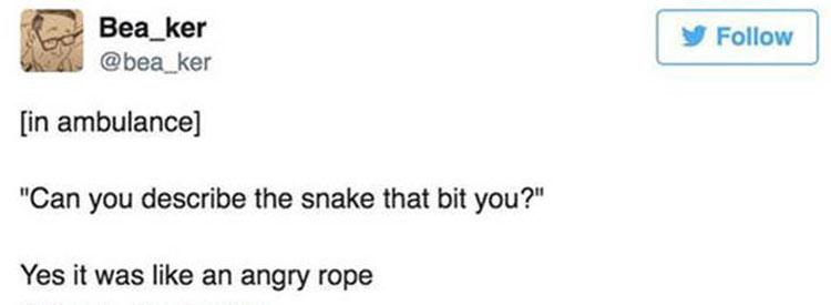 snake-describtion-angry-rope