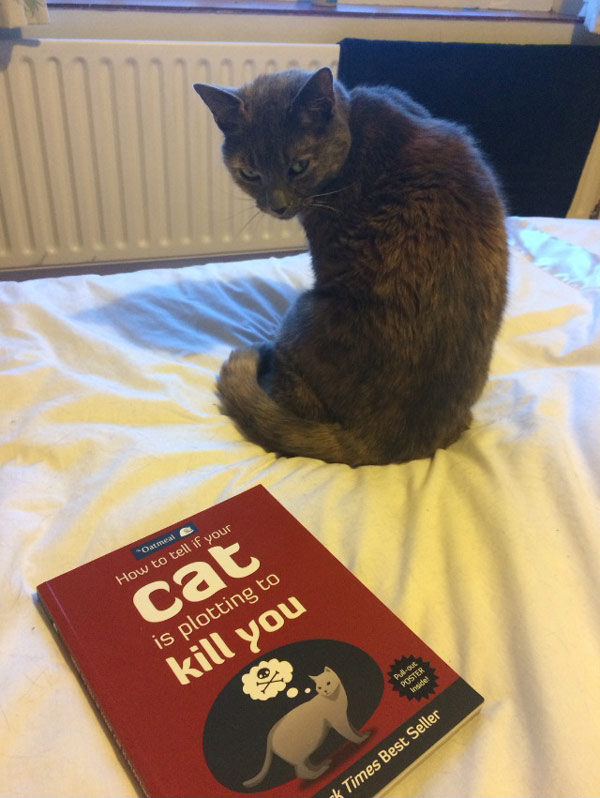 cat-book-plot-kill