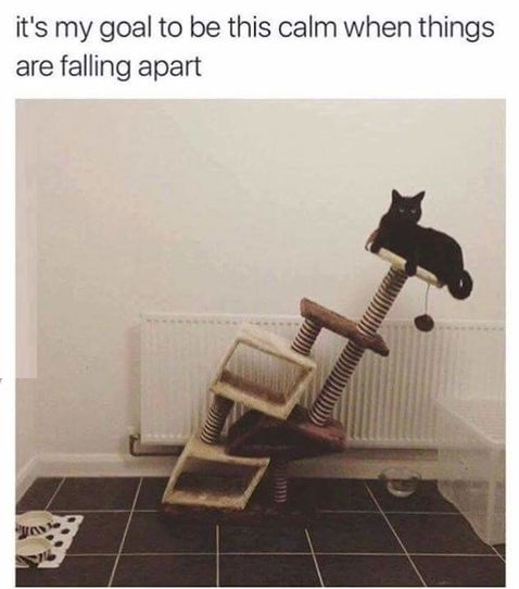 cat-fail-calm