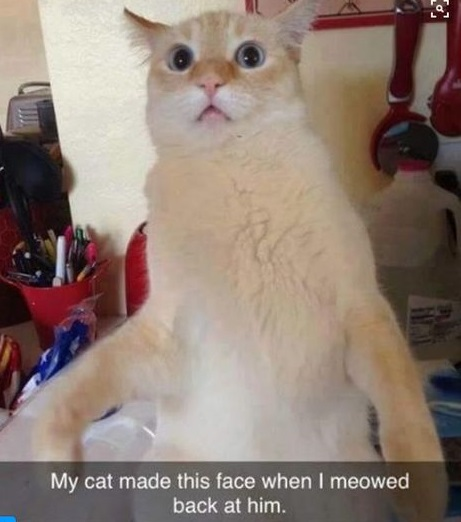 cat-mew-back-face