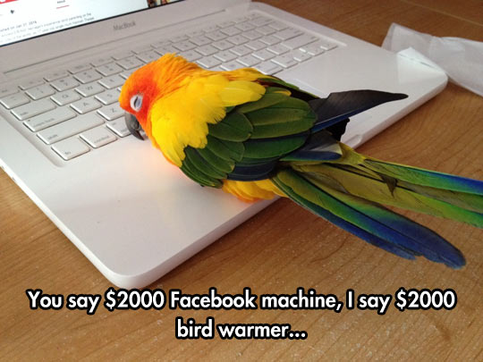 cool-bird-warmer-computer-machine