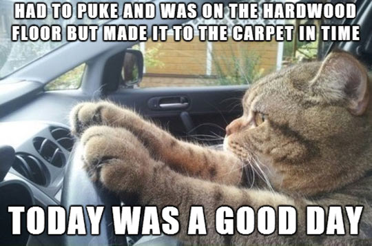 cool-cat-car-driving-carpet-floor