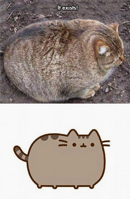 cool-fat-cat-pusheen-real