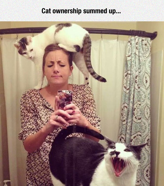 cool-girl-selfie-cat-head