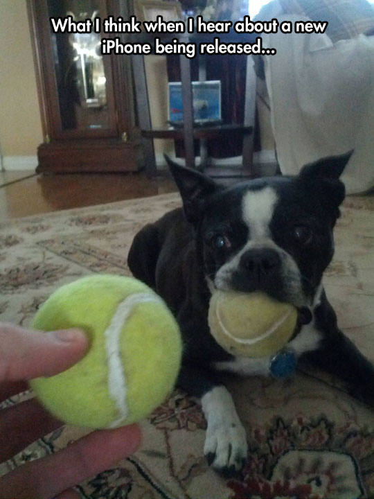 cool-iphone-dog-tennis-ball-same
