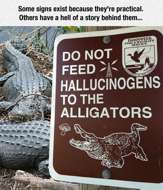 cool-sign-alligator-feed-mushrooms