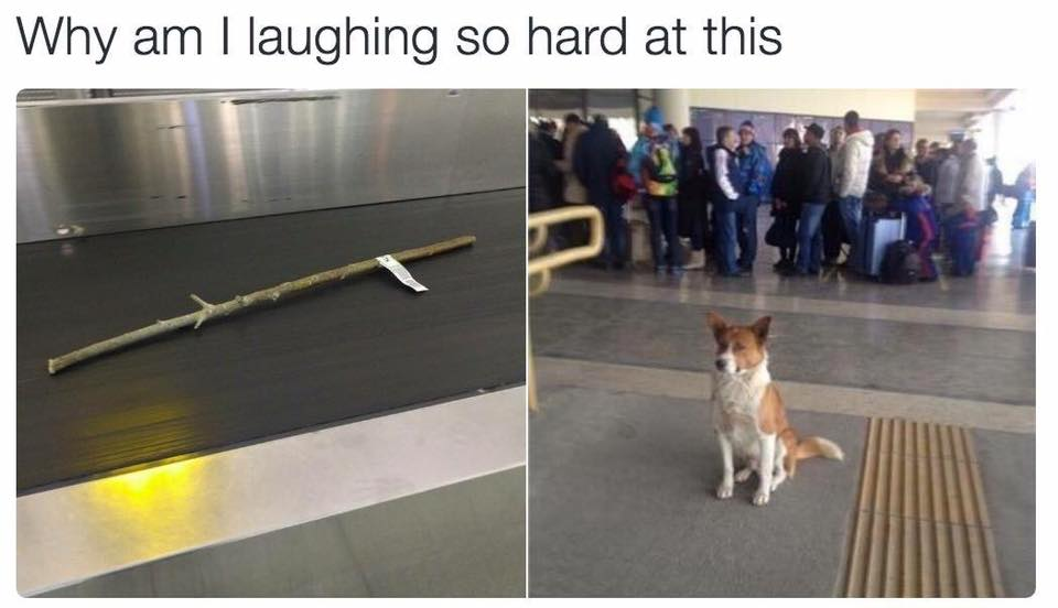 dog-airport-stick