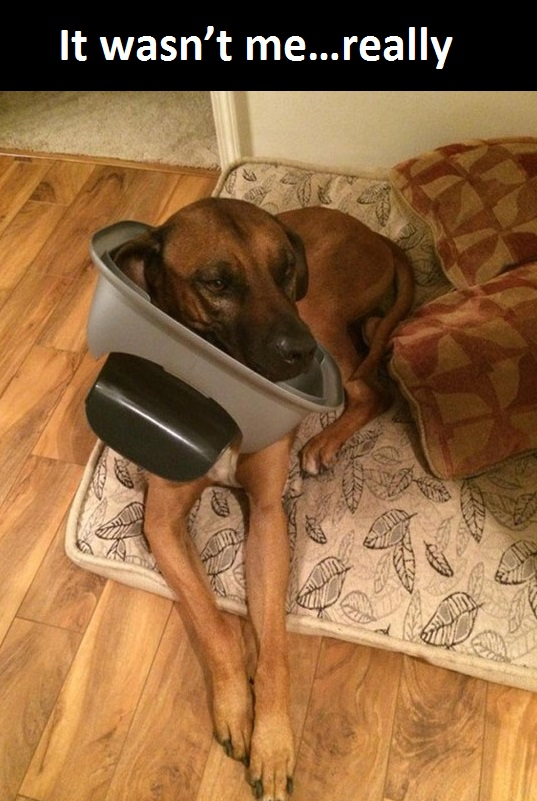 dog-trash-can-busted
