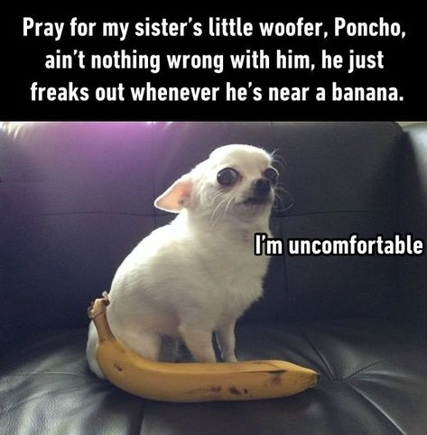 dog-weirdo-banana-sacred