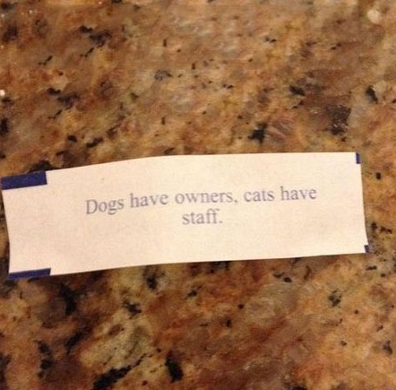 dogs-owners-cat-staff