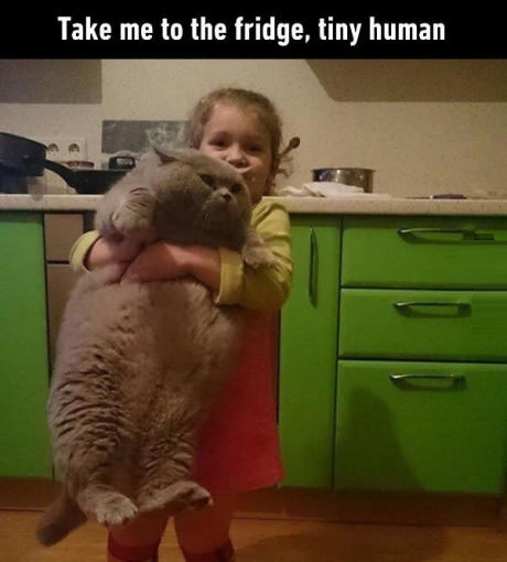 fat-cat-tiny-human