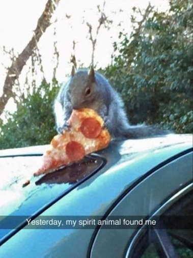 spirit-animal-squirrel-pizza