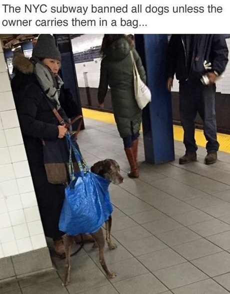 bag-dog-nyc-subway