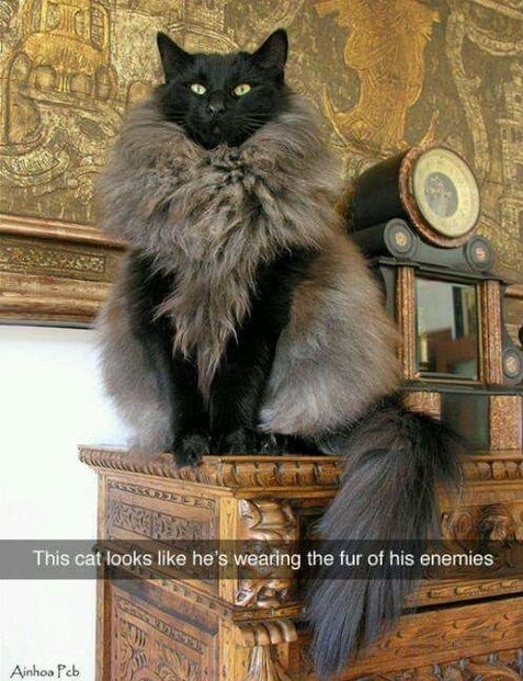 cat-fur-anemies-badass