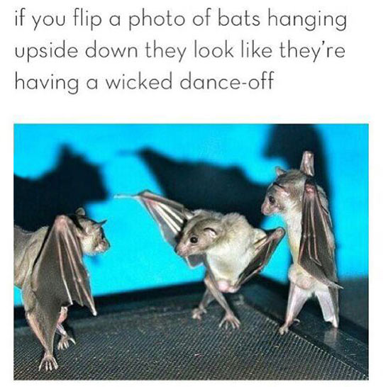 cool-bat-hanging-dance-off