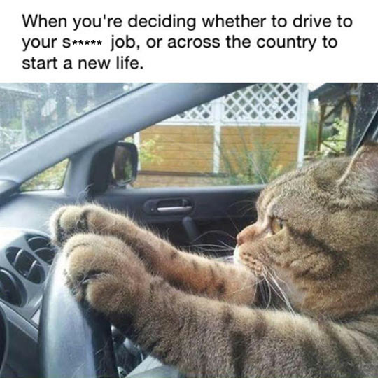 cool-cat-driving-car-taking-decision