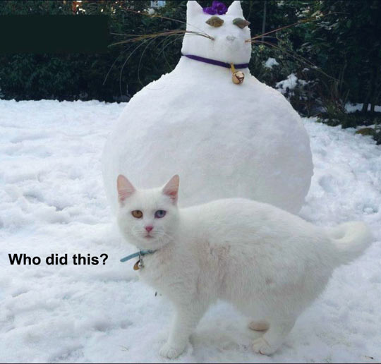 cool-cat-fat-snow-sculpture
