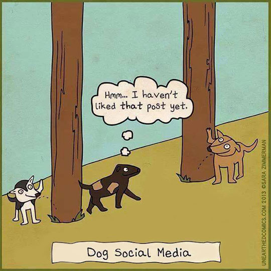 cool-dog-social-media-cartoon-peeing