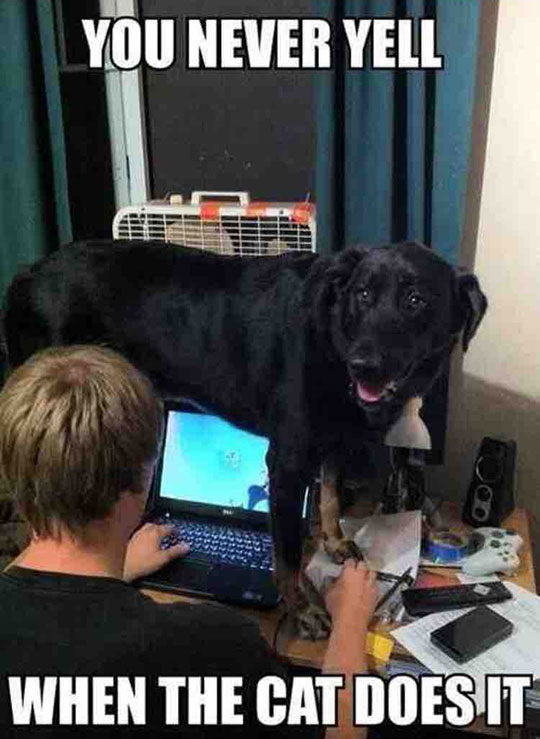 cool-dog-standing-desk-laptop