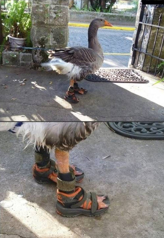 cool-duck-sandals-kids-house