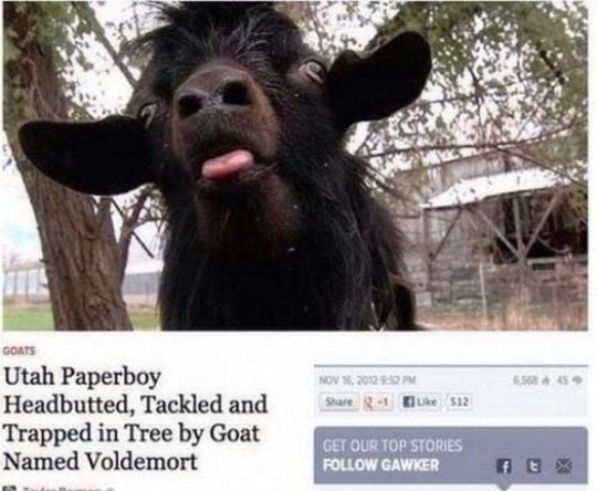 cool-news-headline-goat-voldemort