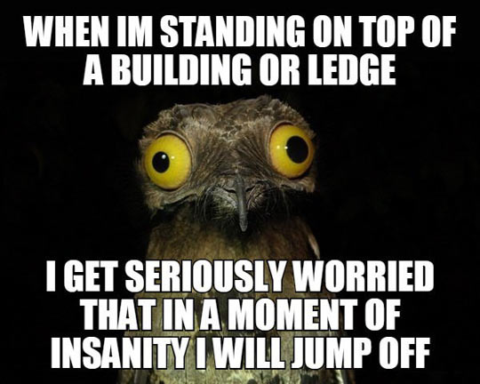 cool-owl-face-top-building-jump-off