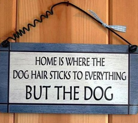 home-dog-hair-sticks