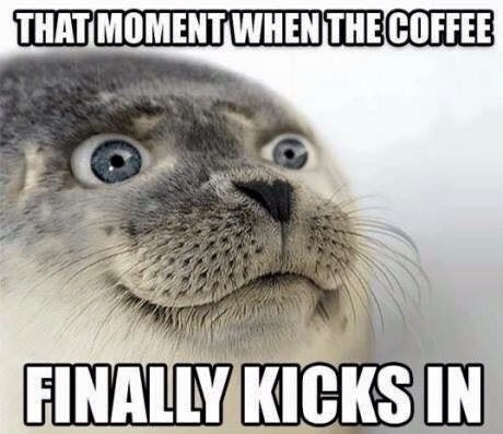 meme-seal-coffee-morning