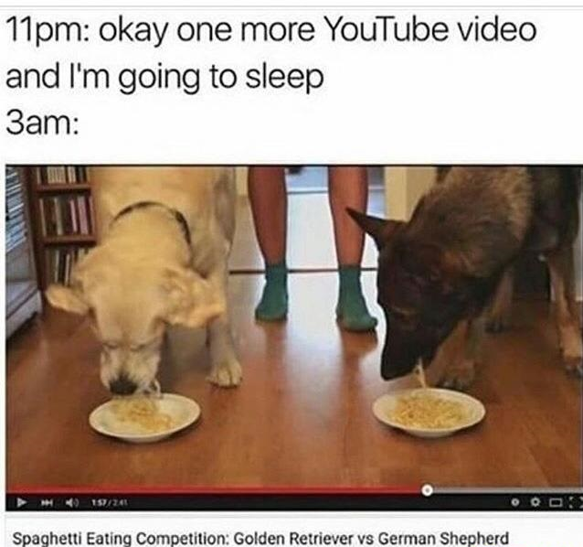 youtube-video-competition-dogs