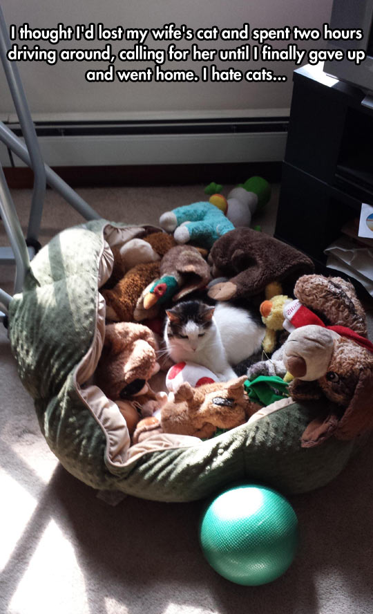 cool-cat-lost-bed-toys-teddy-bears