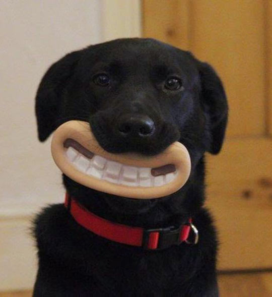 cool-dog-chew-toy-mouth