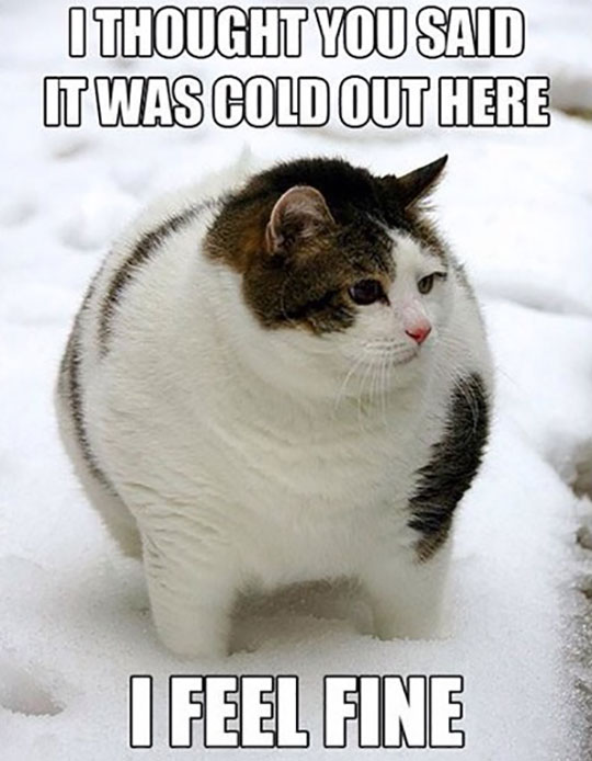 cool-fat-cat-ball-snow