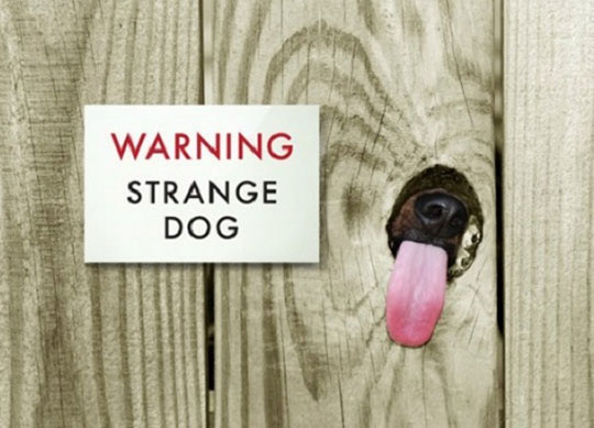 cool-fence-sign-dog-tongue