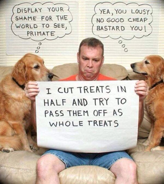 cool-shame-dogs-cardboard-sign-treats