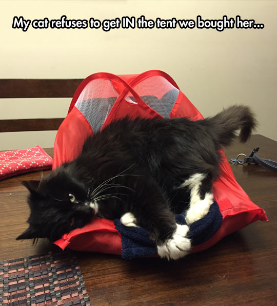 funny-cat-tent-sleeping-on