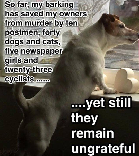 funny-dog-logic-barking-save-life