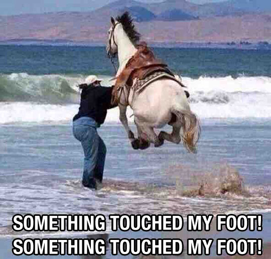 funny-horse-jumping-scared-water