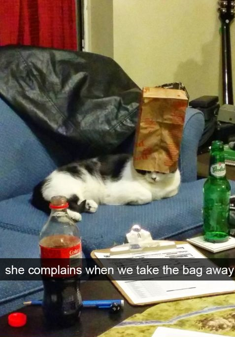 cat-complain-bag-head